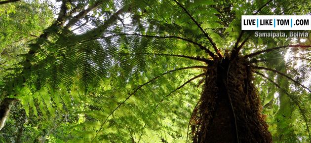 samaipata-forest