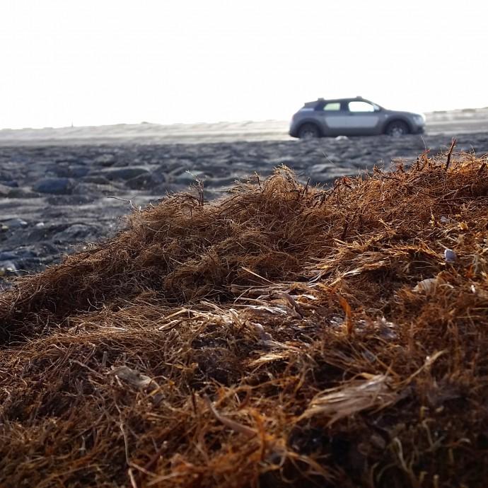 westkapelle beach Citroën C4 Cactus