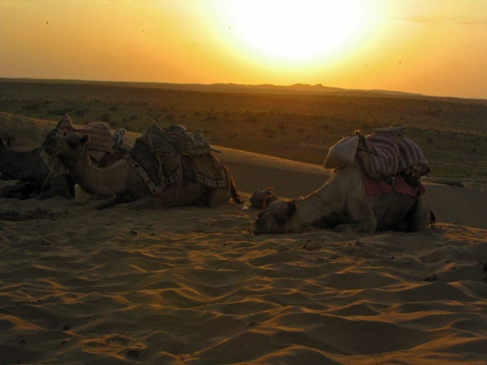 camels sleeping in desert India