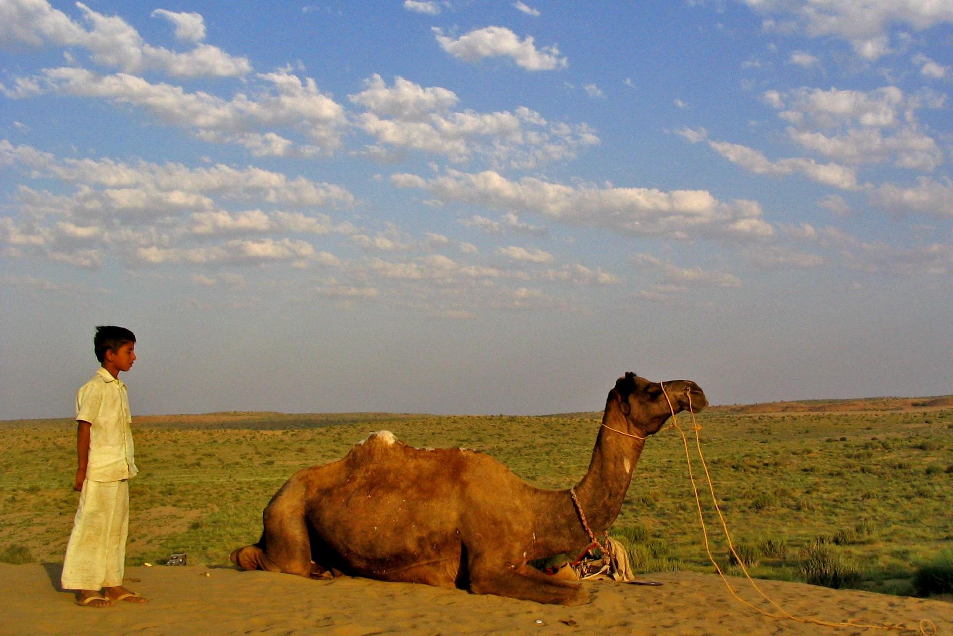 India desert camel trip