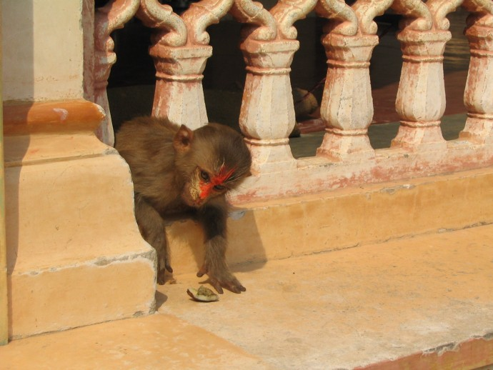 holy monkey palace India