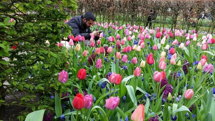 gay travel Holland flowerfields
