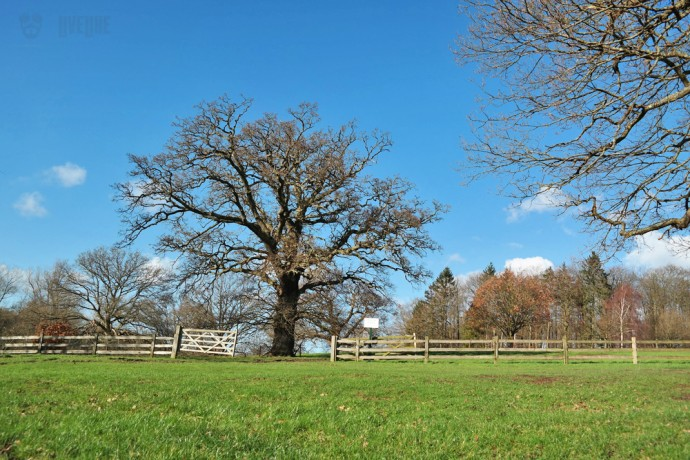 tree in a field with a fence surrounding