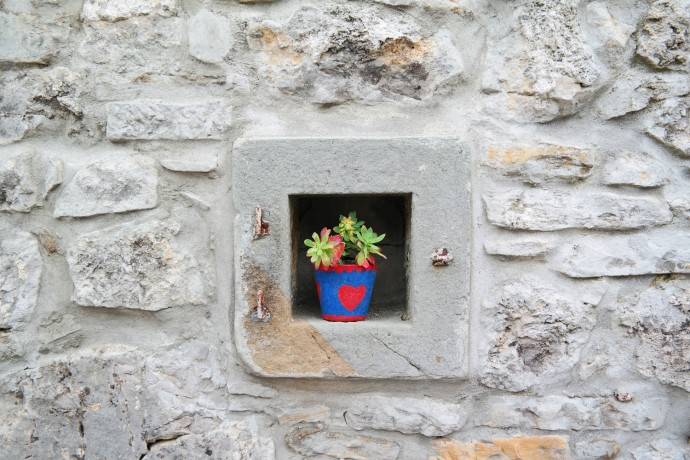 vipava-colorful-plant-in-wall