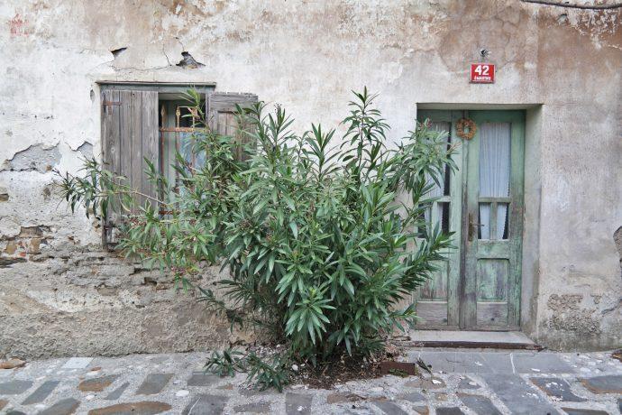 old door and tree in smartno village slovenia