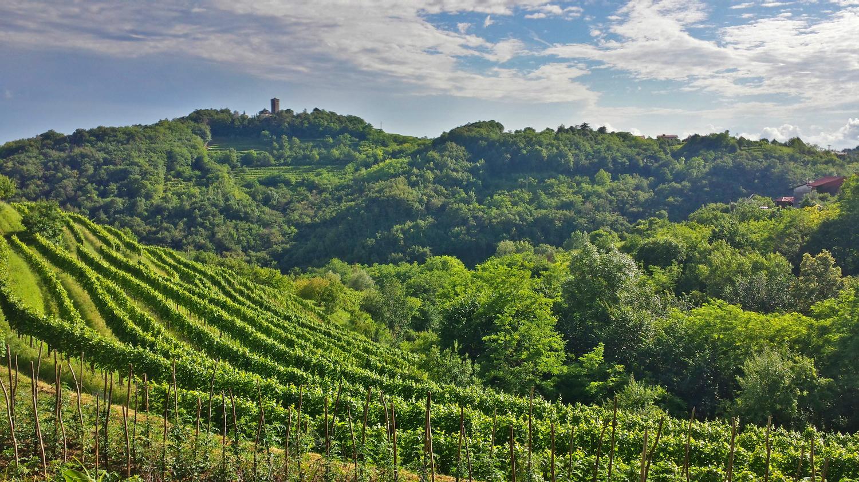 beautiful slovenia gaycation wine tasting