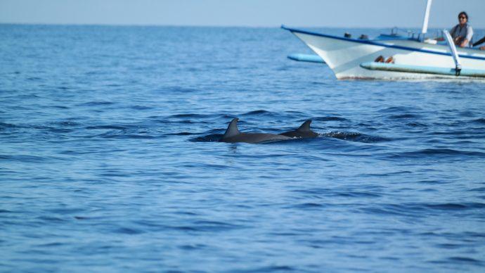 dolfijnentour Bali Lovina