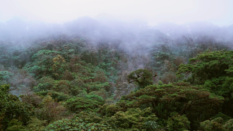 wolkenbos monteverde costa rica