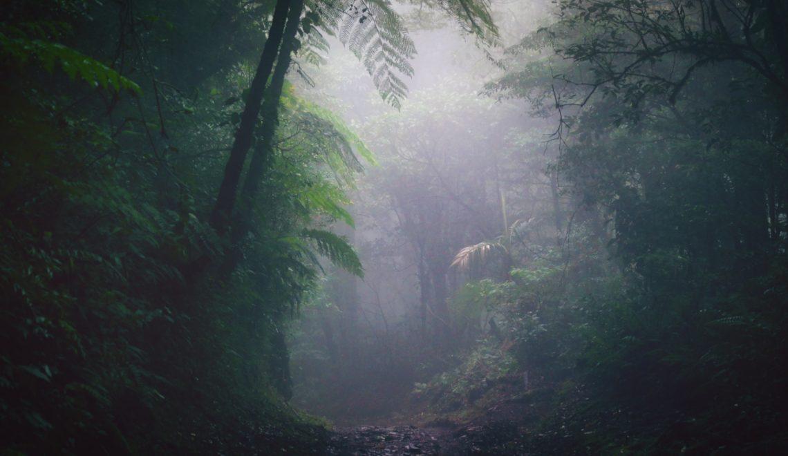 cloud forest monteverde costa rica tropical rainforest