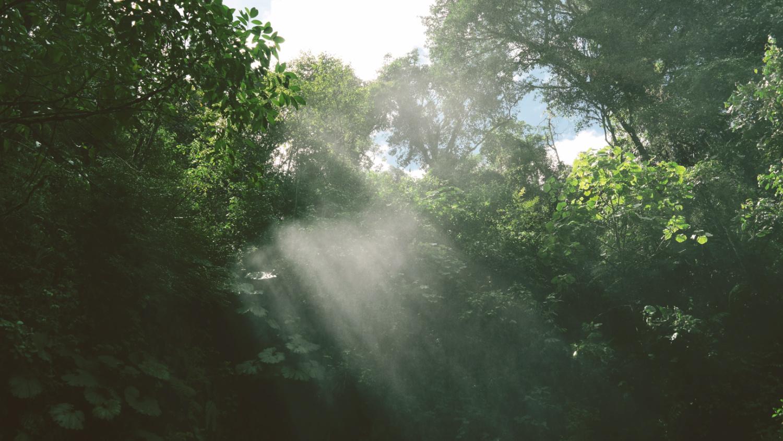 La Paz Waterfall gardens Costa Rica Alajuela