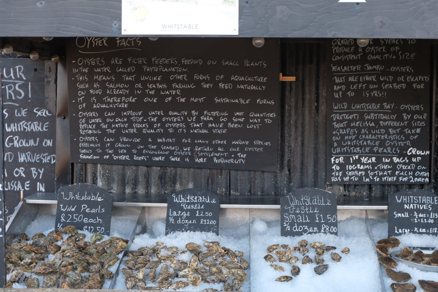 Oysters in Whitstable