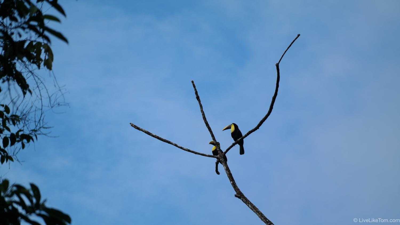 adventure travel costa rica birds